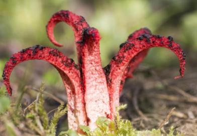 Les 10 plantes les plus étranges