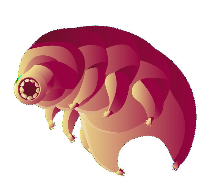 ILLU_tardigrade_curiokids