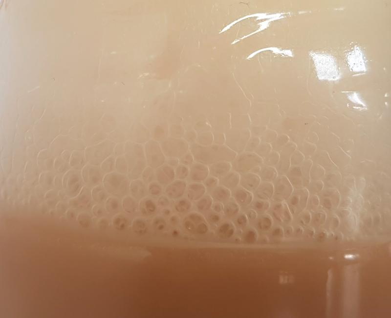 fermentation of bacterias