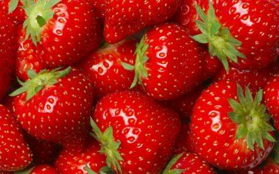 UNE_fraises_curiokids