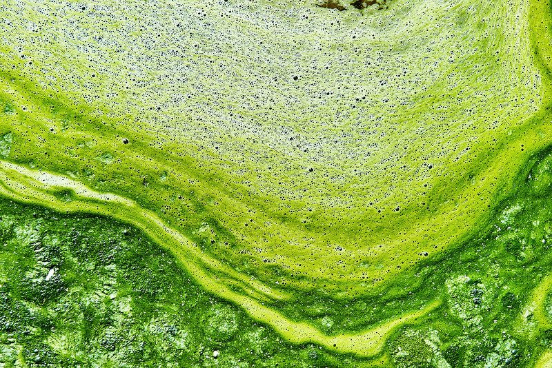 Polluted water with algae. Green and yellow colors. Natural textured backgroundnn