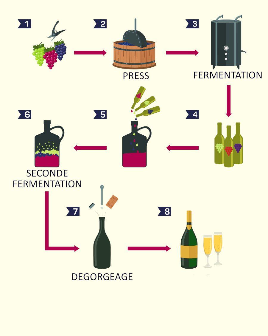 fermentation champagne2_curiokids