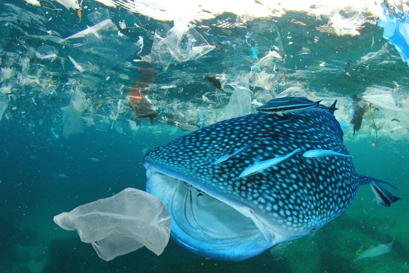 poisson plastique_curiokids